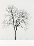 Tree Seasons IV