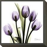 Tulip in Purple