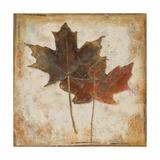 Natural Leaves IV