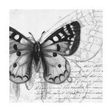 Butterfly Studies I