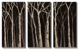 Midnight Birches