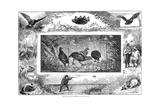 Quail Hunting  1880