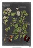 Vintage Botanical Chart VI