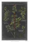 Vintage Botanical Chart VIII