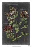 Vintage Botanical Chart IV