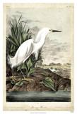 Aigrette Giclée par John James Audubon