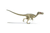 Velociraptor Dinosaur on White Background