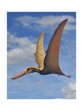 Cearadactylus Atrox  a Large Pterosaur from the Cretaceous Period