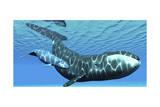 A Female Bowhead Whale Swims with Her Calf Through Ocean Waters