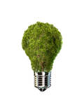 Light Bulb with Tree Inside Glass  Isolated on White Background