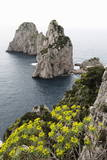 The Rugged Faraglioni Rocks in Capri  Campania  Italy  Mediterranean  Europe