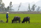 Tam Coc  Ninh Binh Area  Vietnam  Indochina  Southeast Asia  Asia