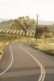 A Road and Vineyard in San Luis Obispo County Wine Country