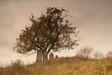 An Old Cemetery Near Cambridge  New York