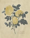 Embellished Double Yellow Rose