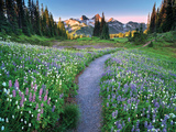 Wildflower Walkway