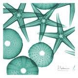 Starfish Trip 3 Reproduction d'art par Albert Koetsier
