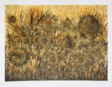 Untitled - Sunflowers