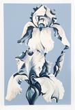 White Irises on Blue