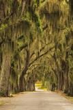 USA  Georgia  Savannah  Entrance drive to Bethesda School in Savannah