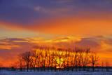Canada  Manitoba  Altona Trees at sunrise on the snowy prairie