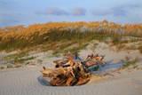Sea oats on Tybee Island  Georgia  USA