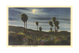 Moonlight at Twenty-Nine Palms