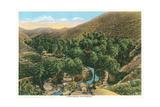 Palm Canyon  California