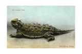 Horned Toad  Fort Davis