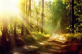 Beautiful Scene Misty Old Forest with Sun Rays, Shadows and Fog Papier Photo par Subbotina Anna