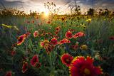Breezy Dawn over Texas Wildflowers