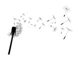 Blow Dandelion Reproduction d'art par Losw
