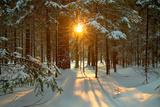 Paysage hivernal Reproduction d'art par Yanika