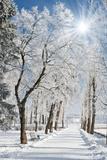 Beautiful Winter Landscape with Snow Covered Trees Papier Photo par Leonid Tit
