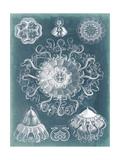 Sealife Blueprint II