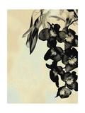 Orchid Blush Panels II