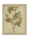 Romantic Pressed Flowers IV Reproduction d'art par Jennifer Goldberger