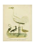 Antique Crane and Heron
