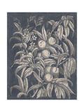 Vintage Fruit and Floral II