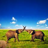 Elephants Playing With Their Trunks On African Savanna Safari In Amboseli  Kenya  Africa
