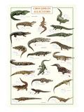 Crocodiles et alligators Reproduction d'art