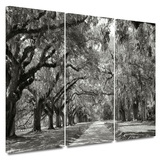 Live Oak Avenue 3 piece gallery-wrapped canvas