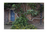 Fig Tree Against Brick Wall Blue Door