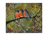 Birds Robins Family Portrait