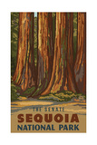 Sequoia National Park The Senate Pal 1224