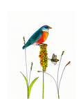 Bird and Honey Bee Print