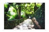 Arbor Path  Ravello  Italy