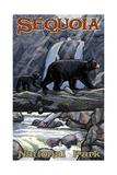 Sequoia National Park Bears on Log Pal 1210