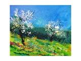 Orchard 564150