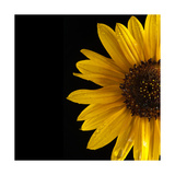 Sunflower Number 3